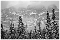 Conifers and steep rock face in winter. Banff National Park, Canadian Rockies, Alberta, Canada ( black and white)