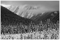 Trees, mountains and clouds. Banff National Park, Canadian Rockies, Alberta, Canada ( black and white)