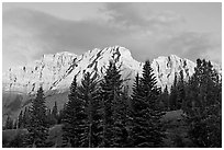 Peaks and conifers near Two Jack Lake, sunrise. Banff National Park, Canadian Rockies, Alberta, Canada (black and white)