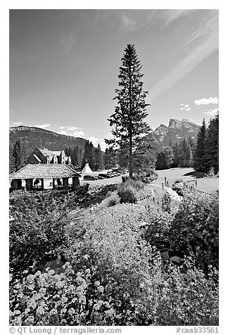 Flowers in Cascade Gardens. Banff National Park, Canadian Rockies, Alberta, Canada (black and white)
