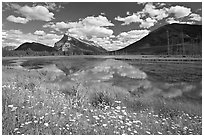 Summer flowers on the shore of first Vermillion Lake, afternon. Banff National Park, Canadian Rockies, Alberta, Canada (black and white)