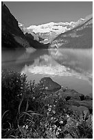 Yellow flowers, Victoria Peak, and Lake Louise, morning. Banff National Park, Canadian Rockies, Alberta, Canada (black and white)