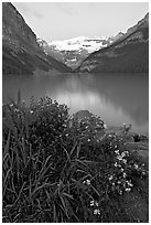 Yellow flowers, Victoria Peak, and green-blue Lake Louise, dawn. Banff National Park, Canadian Rockies, Alberta, Canada (black and white)