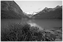 Yellow flowers, Victoria Peak, and Lake Louise, dawn. Banff National Park, Canadian Rockies, Alberta, Canada ( black and white)