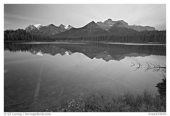 Bow range reflected in Herbert Lake, dawn. Banff National Park, Canadian Rockies, Alberta, Canada (black and white)