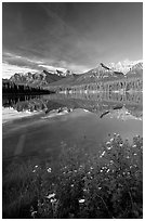 Yellow flowers and Bow range reflected in Herbert Lake, early morning. Banff National Park, Canadian Rockies, Alberta, Canada ( black and white)