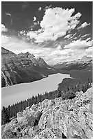 Turquoise Peyto Lake. Banff National Park, Canadian Rockies, Alberta, Canada (black and white)