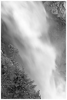 Water and trees, Panther Falls. Banff National Park, Canadian Rockies, Alberta, Canada ( black and white)