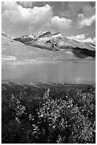 Wildflowers and  glacial pond at the base of the Athabasca Glacier. Jasper National Park, Canadian Rockies, Alberta, Canada (black and white)