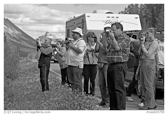 Tourists lined up on Icefields Parkway to photograph wildlife. Jasper National Park, Canadian Rockies, Alberta, Canada (black and white)
