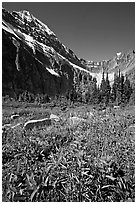 Alpine meadow and Paintbrush below Mt Edith Cavell. Jasper National Park, Canadian Rockies, Alberta, Canada (black and white)