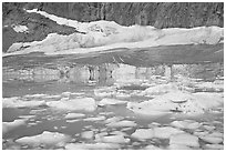 Icebergs in glacial lake and Cavell Glacier. Jasper National Park, Canadian Rockies, Alberta, Canada ( black and white)