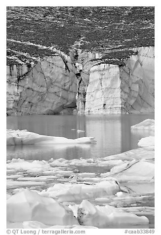 Cavell Glacier and icebergs detached from the glacier. Jasper National Park, Canadian Rockies, Alberta, Canada (black and white)