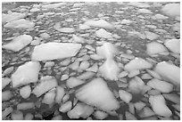 Iceberg tile, Cavell Pond. Jasper National Park, Canadian Rockies, Alberta, Canada ( black and white)