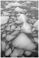 Tile of icebergs, Cavel Pond. Jasper National Park, Canadian Rockies, Alberta, Canada ( black and white)