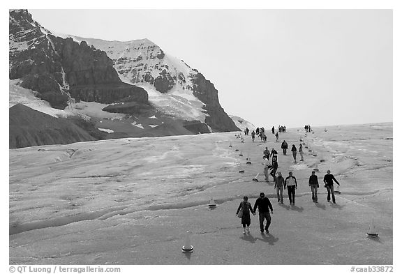 Tourists in a marked area of Athabasca Glacier. Jasper National Park, Canadian Rockies, Alberta, Canada (black and white)