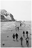 Tourists descending Athabasca Glacier. Jasper National Park, Canadian Rockies, Alberta, Canada (black and white)