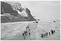 Groups of people amongst glacier and peaks. Jasper National Park, Canadian Rockies, Alberta, Canada ( black and white)