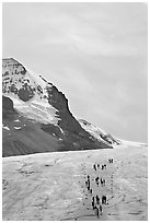 Athabasca Glacier with people in delimited area. Jasper National Park, Canadian Rockies, Alberta, Canada ( black and white)
