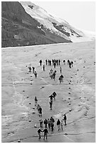 People in delimited area at the toe of Athabasca Glacier. Jasper National Park, Canadian Rockies, Alberta, Canada ( black and white)