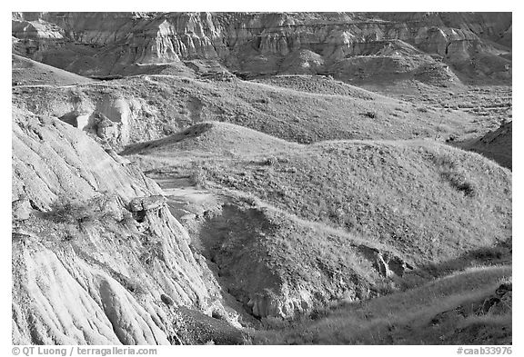 Hills and badlands, morning, Dinosaur Provincial Park. Alberta, Canada (black and white)