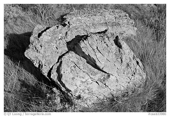 Rock with lichen lying in grass, Dinosaur Provincial Park. Alberta, Canada (black and white)