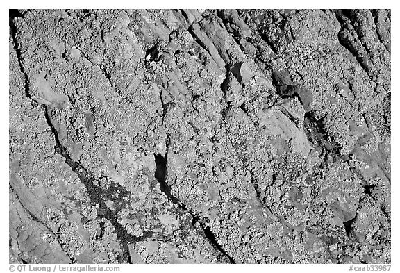 Detail of lichen on rock, Dinosaur Provincial Park. Alberta, Canada (black and white)