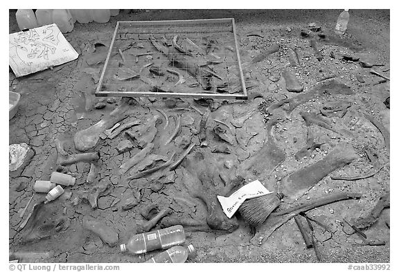 Dinosaur fossil excavation site, Dinosaur Provincial Park. Alberta, Canada (black and white)