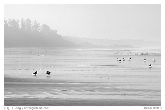Seabirds, Long Beach, early morning. Pacific Rim National Park, Vancouver Island, British Columbia, Canada (black and white)