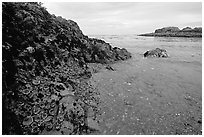 Cove and rock festoned with anemones south of Long Beach. Pacific Rim National Park, Vancouver Island, British Columbia, Canada (black and white)
