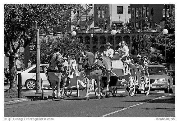 Horse carriagess on the street. Victoria, British Columbia, Canada (black and white)