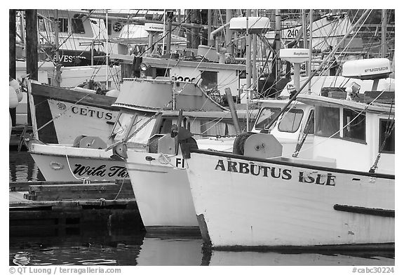 Commercial Fishing fleet, Uclulet. Vancouver Island, British Columbia, Canada (black and white)