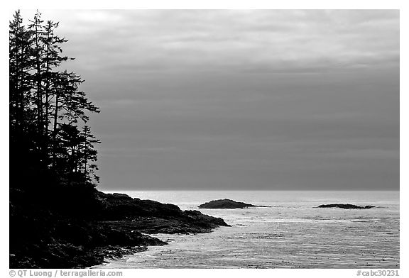 Trees and silvery light on Ocean, late afternoon. Pacific Rim National Park, Vancouver Island, British Columbia, Canada (black and white)