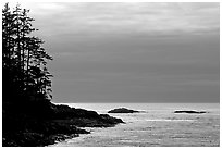 Trees and silvery light on Ocean, late afternoon. Pacific Rim National Park, Vancouver Island, British Columbia, Canada ( black and white)