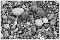 Pebbles, South Beach. Pacific Rim National Park, Vancouver Island, British Columbia, Canada (black and white)