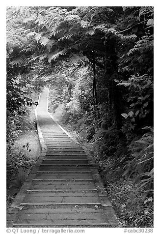 Boardwalk, South Beach trail. Pacific Rim National Park, Vancouver Island, British Columbia, Canada (black and white)