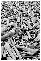 Driftwood, Long Beach. Pacific Rim National Park, Vancouver Island, British Columbia, Canada (black and white)