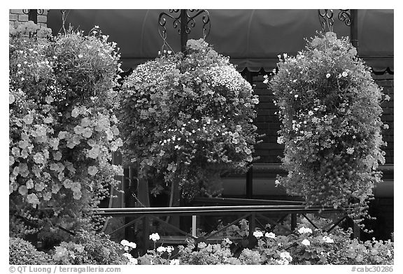 Hanging Flower baskets. Victoria, British Columbia, Canada (black and white)