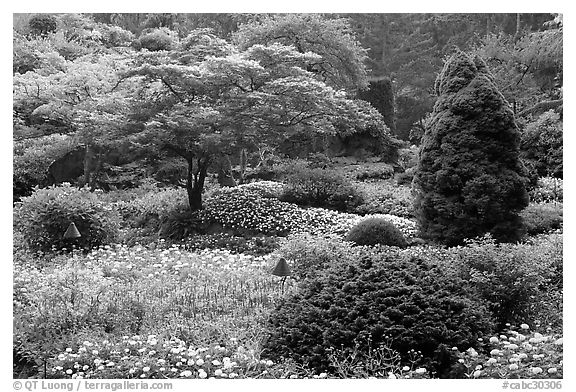 Annual flowers and trees in Sunken Garden. Butchart Gardens, Victoria, British Columbia, Canada (black and white)