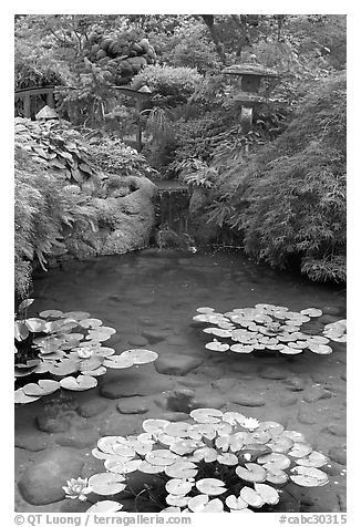 Lotus pond, Japanese Garden. Butchart Gardens, Victoria, British Columbia, Canada (black and white)