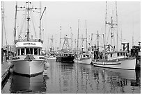 Commercial fishing boats, Upper Harbor. Victoria, British Columbia, Canada ( black and white)