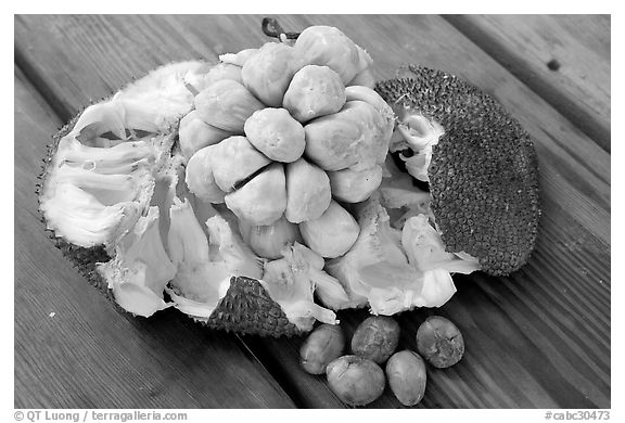 Jack Fruit. Vancouver, British Columbia, Canada (black and white)