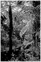 Tropical vegetation inside the dome of the Bloedel conservatory, Queen Elizabeth Park. Vancouver, British Columbia, Canada (black and white)