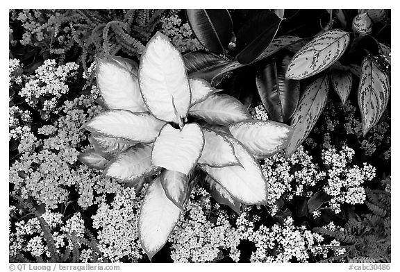 Tropical flowers and plants, Bloedel conservatory, Queen Elizabeth Park. Vancouver, British Columbia, Canada (black and white)