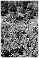 Flowers and sunken garden, Queen Elizabeth Park. Vancouver, British Columbia, Canada (black and white)