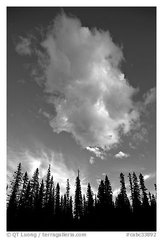 Trees and cloud, sunset. Yoho National Park, Canadian Rockies, British Columbia, Canada (black and white)