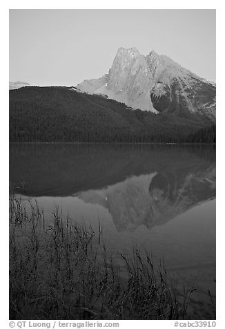 Reeds and Mount Burgess reflected in Emerald Lake, dusk. Yoho National Park, Canadian Rockies, British Columbia, Canada (black and white)