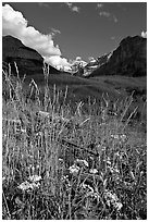 Wildflowers, mountains and Stanley Glacier, afternoon. Kootenay National Park, Canadian Rockies, British Columbia, Canada ( black and white)