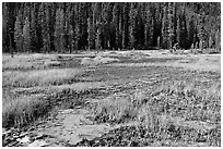 Ochre bed and trees. Kootenay National Park, Canadian Rockies, British Columbia, Canada (black and white)