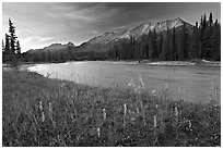 Mitchell range, Kootenay River, and flowers, sunset. Kootenay National Park, Canadian Rockies, British Columbia, Canada (black and white)